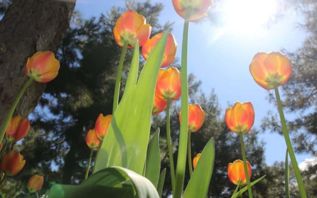 Køb nye planter og buske til haven